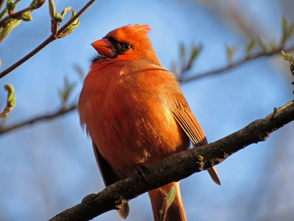 Cardinal 1500 3-31-2019 (46)P.jpg