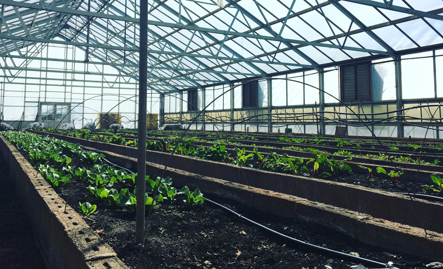 One of the produce greenhouses in early spring.
