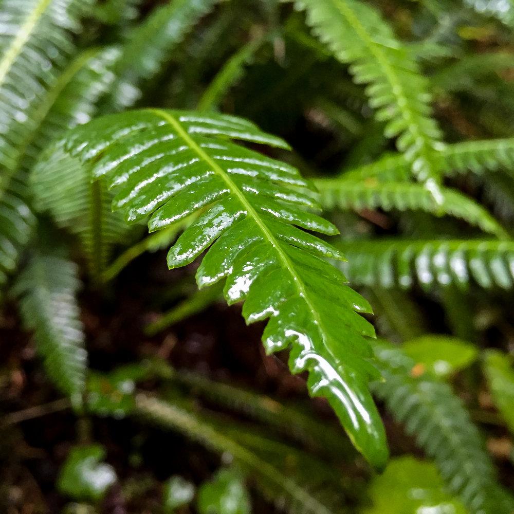 rainier-15.jpg