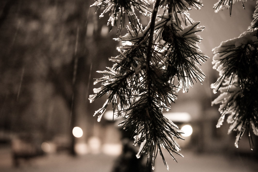 47. First snowfall, Saint Paul, MN