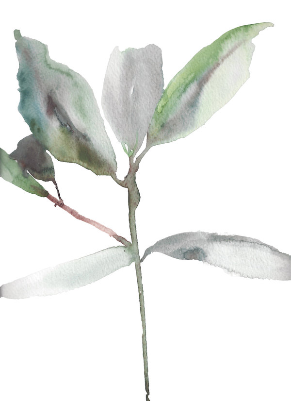 Rhododendron Study No. 1