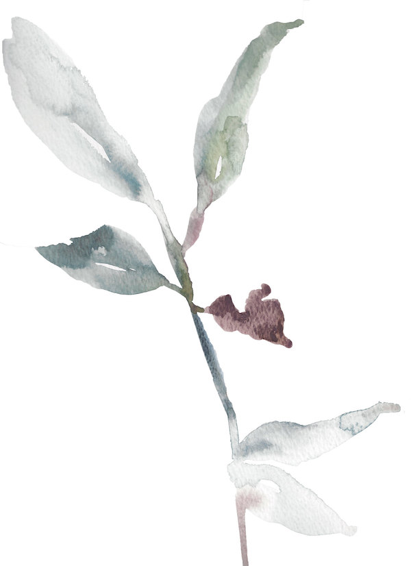 Rhododendron Study No. 2