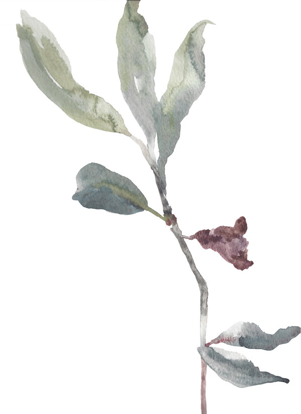 Rhododendron Study No. 6