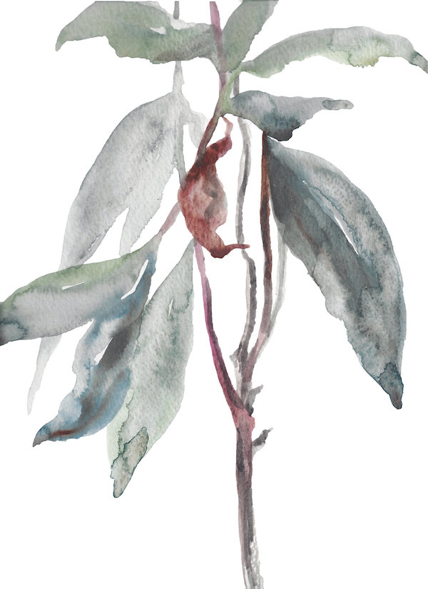 Rhododendron Study No. 8