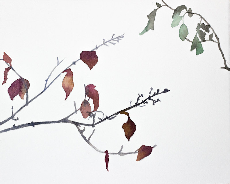 Two Branches