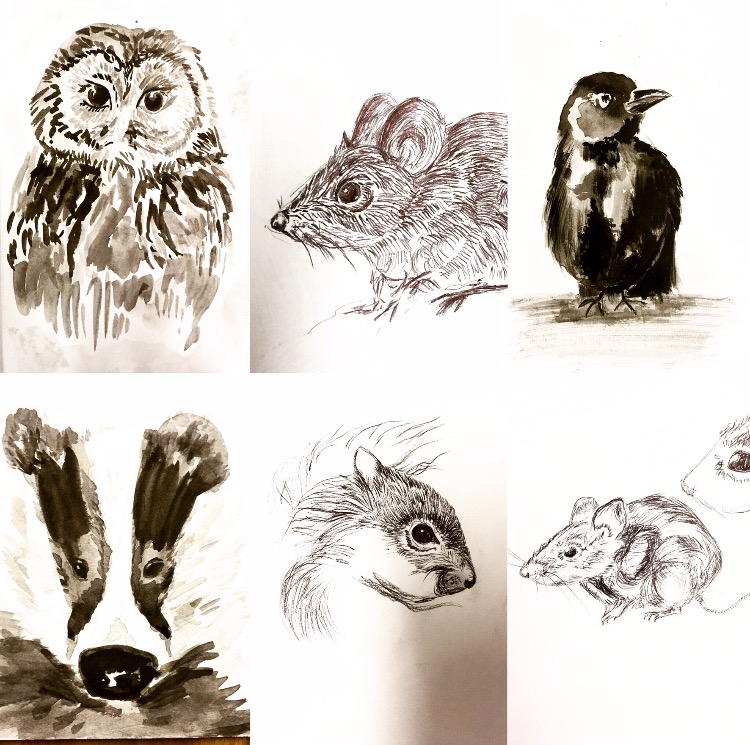 Learn how to create expressive animal drawings using pen and ink!