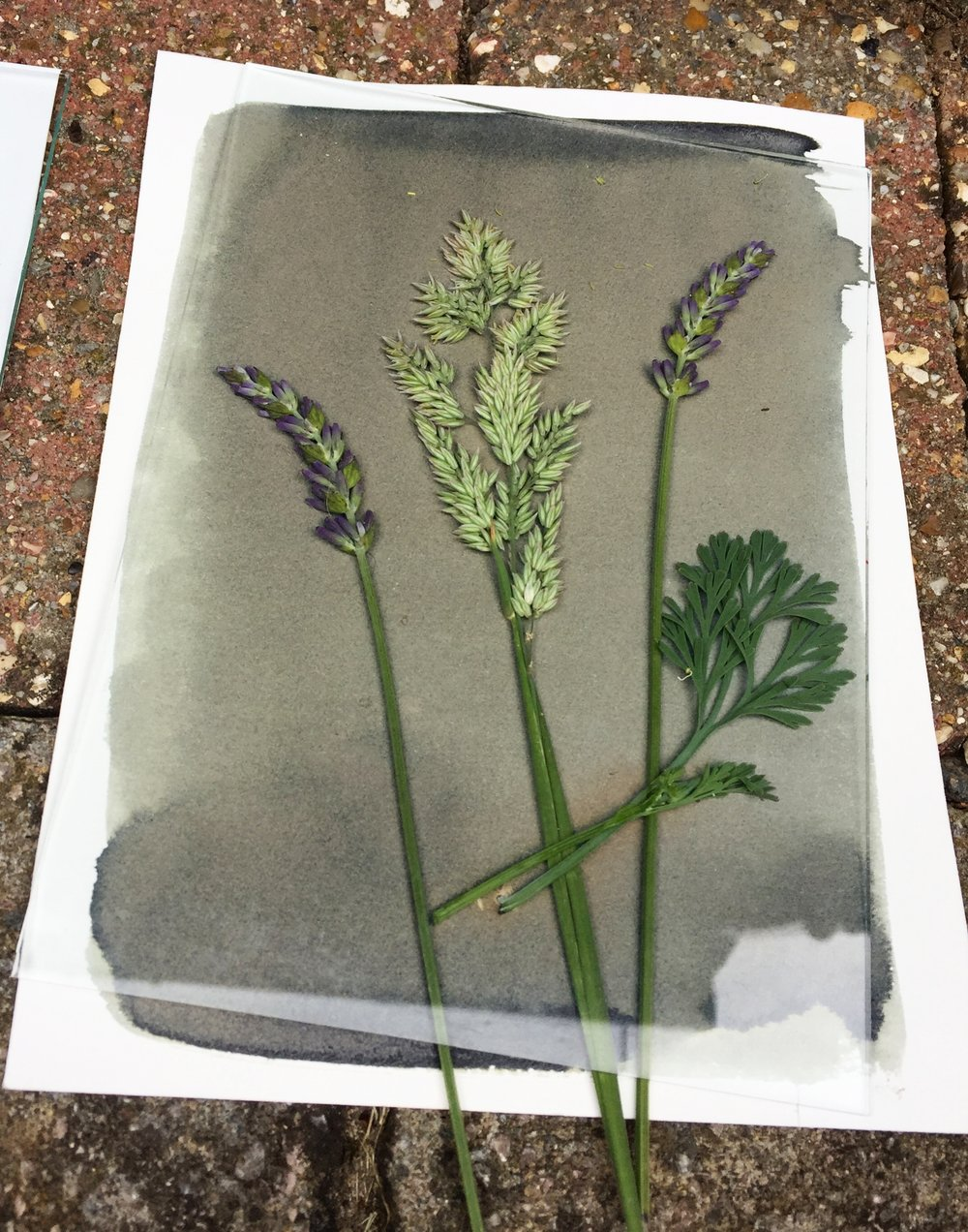 Expose to the sun