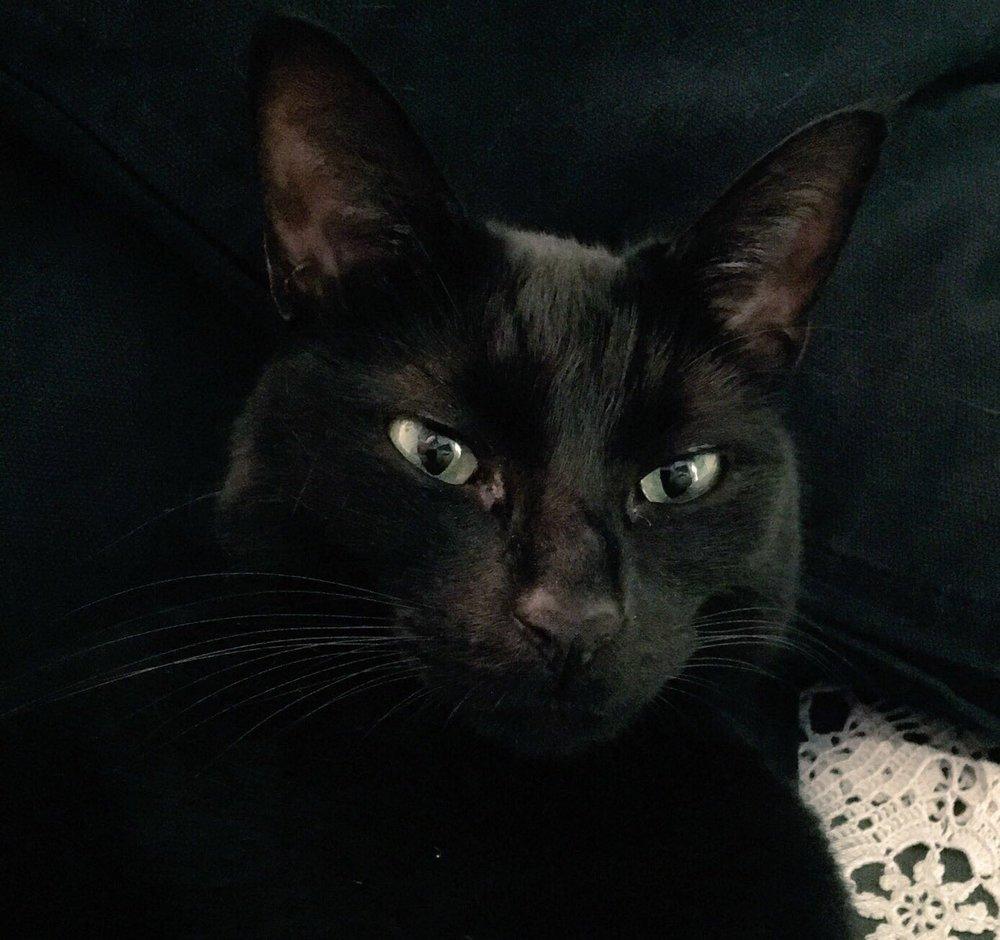Kristina's cat Mimmi