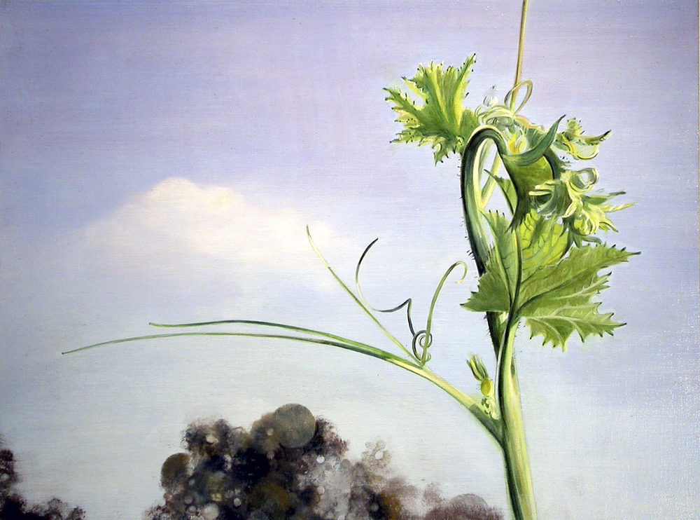 "Plant  oil on panel 16""x12""2006*"