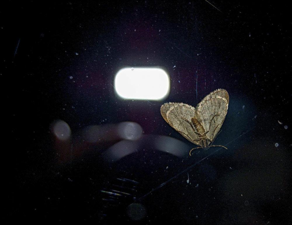 Studio Noir  - Moth
