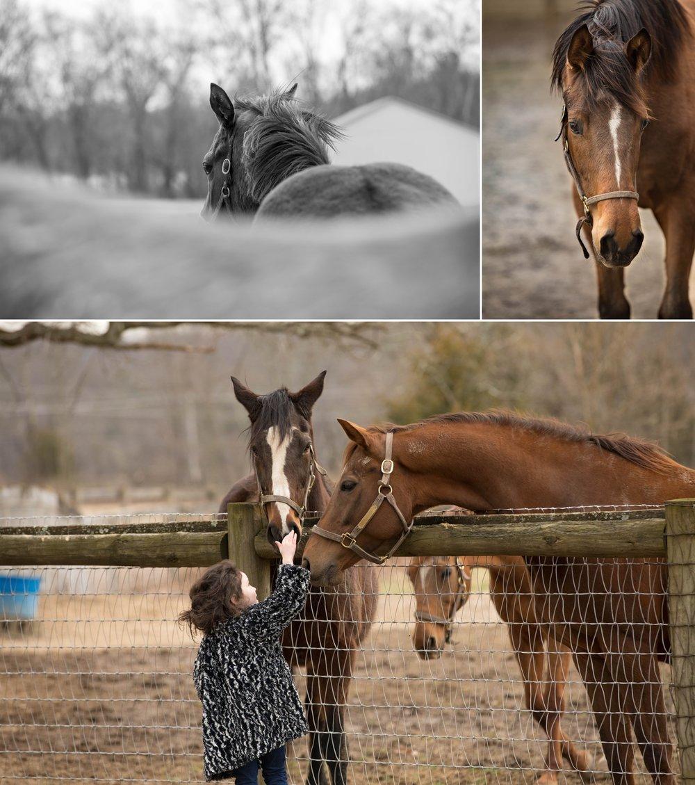 Foals 4.jpg