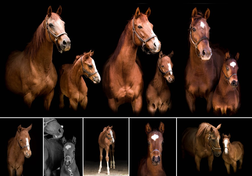 Foals 10.jpg