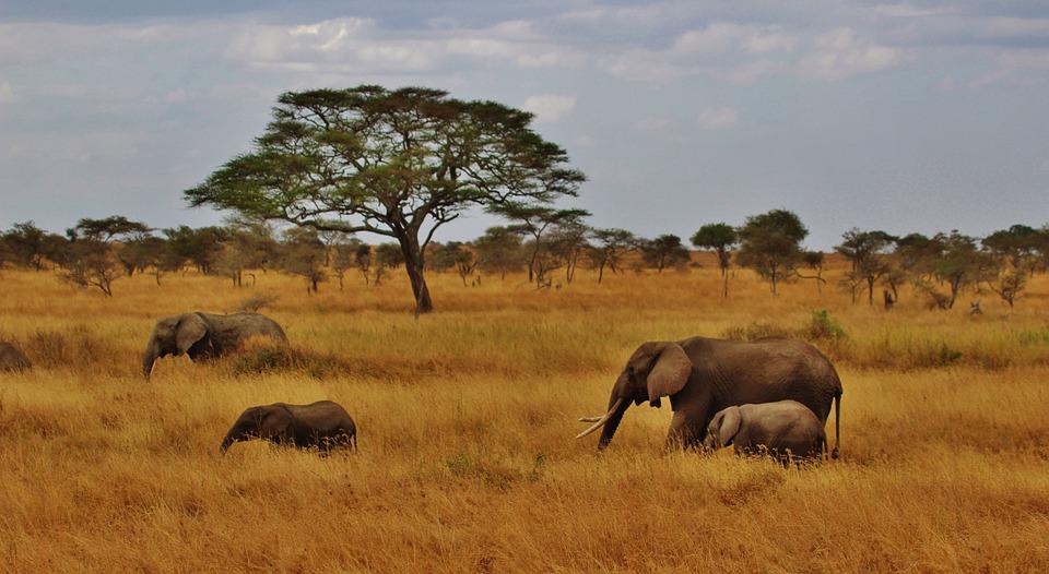 Safari in Tanzania >>