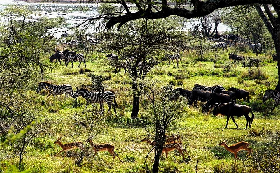 Tanzania Safari 2.jpg