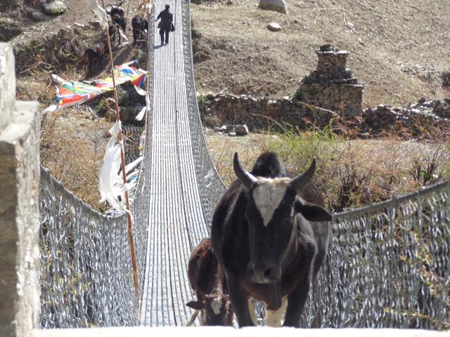 Nepal Manaslu.jpg
