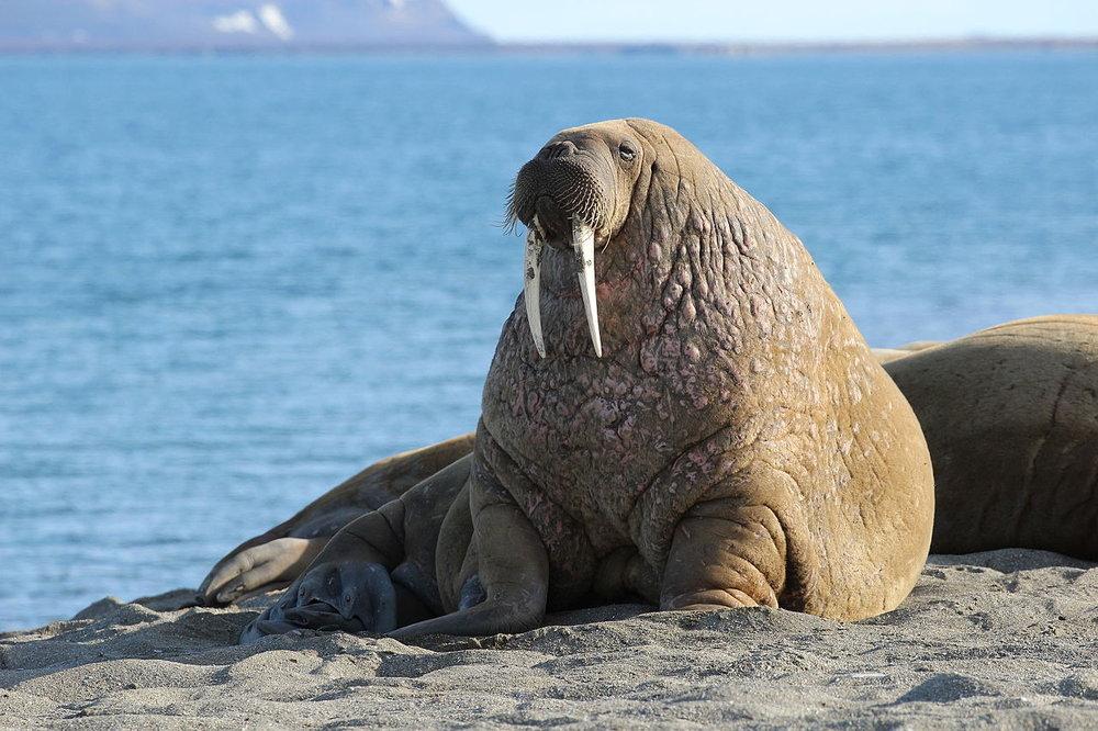 Blog Svalbard 4.jpg