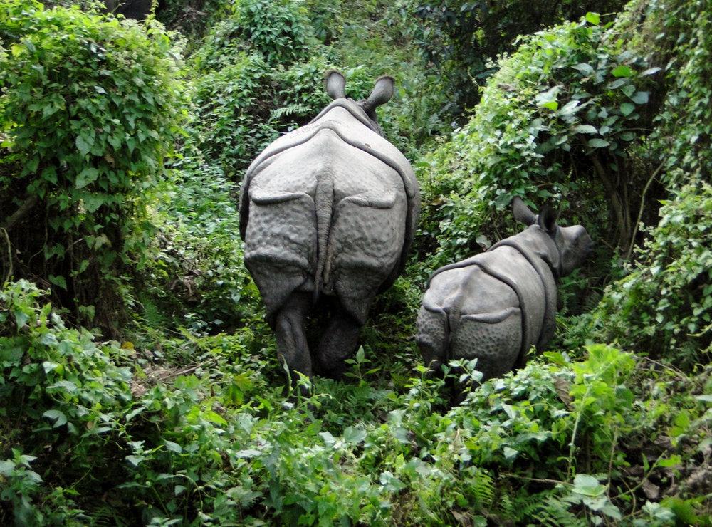 The Jungle Patrol 3.jpg