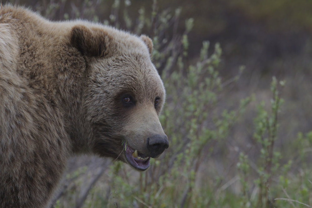 The Amazing Wild Mammals of Alaska 4.jpg