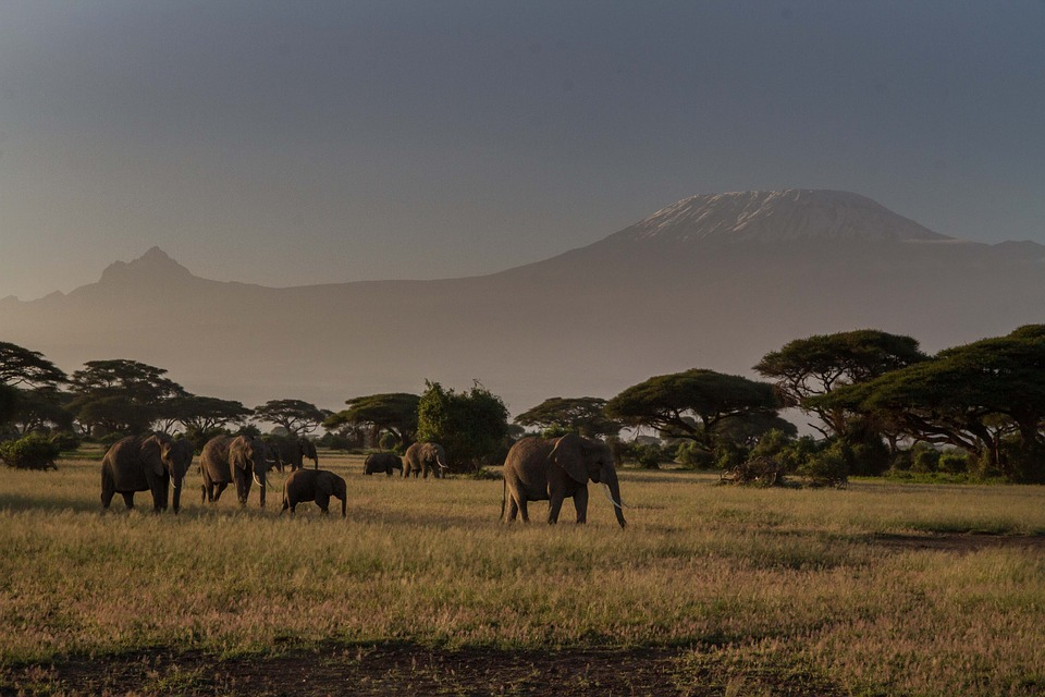 Kenya Elephant.jpg