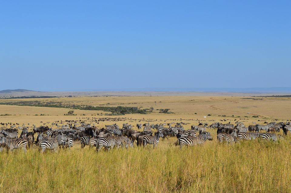 Kenya Safari.jpg
