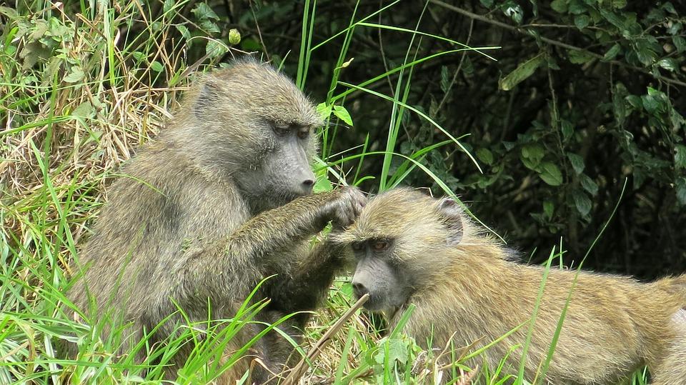 Tanzania Arusha NP 2.jpg