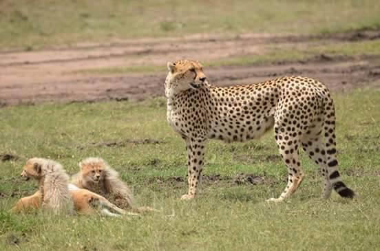 Tanzania Arusha NP 3.jpg