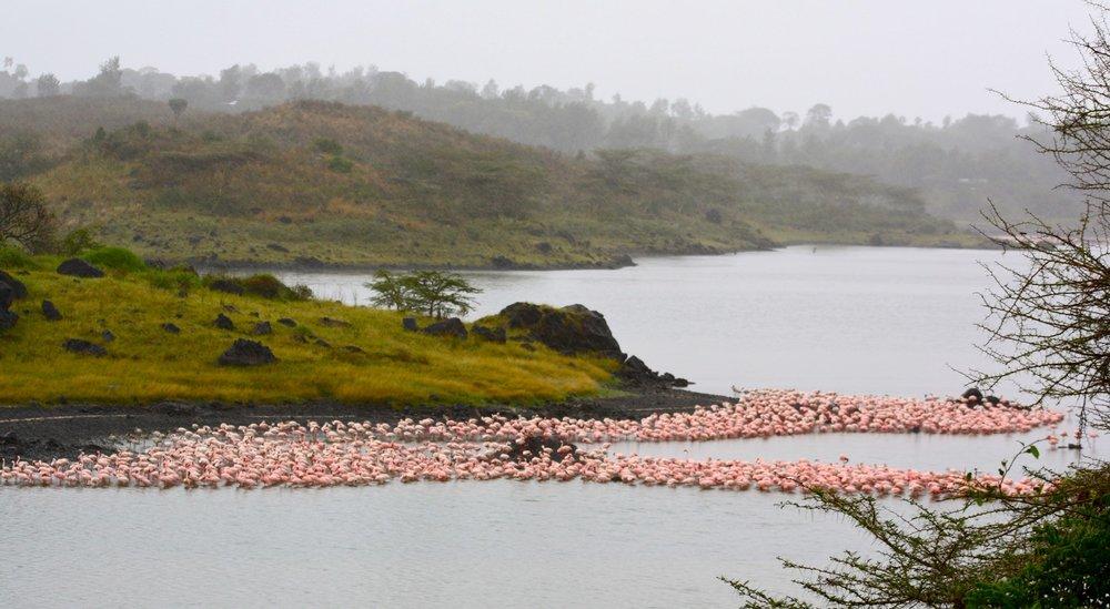 Tanzania Arusha NP 4.jpg
