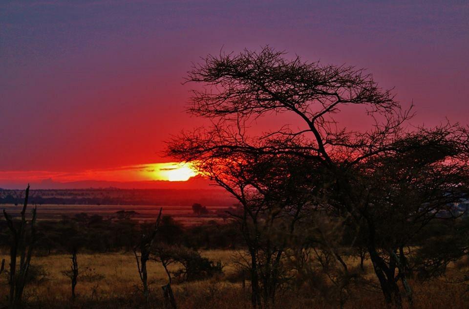 Tanzania Serengeti.jpg
