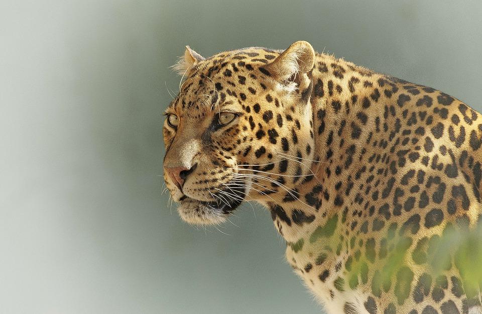 Tanzania Serengeti 1.jpg