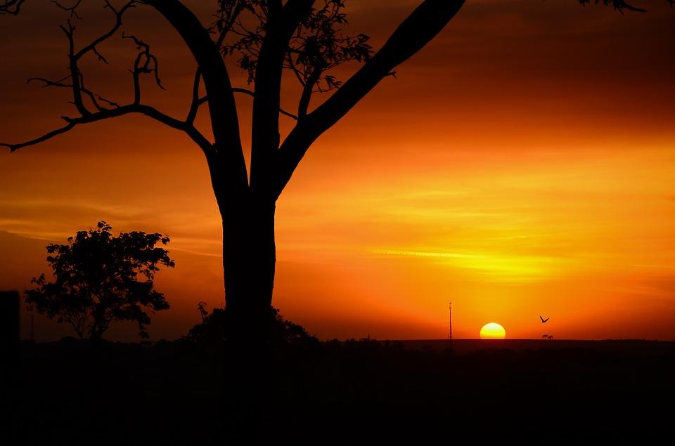 Tanzania Serengeti 13.jpg