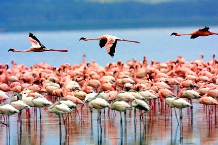 Lake Manyara National Park >>