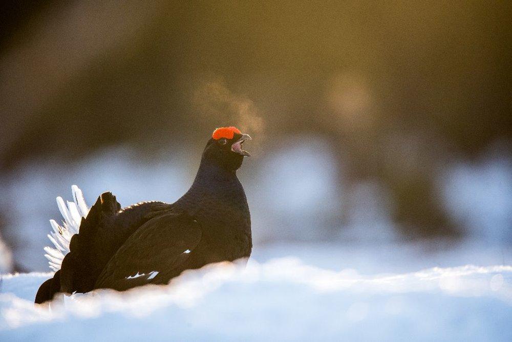 Norway wildlife 3.jpg