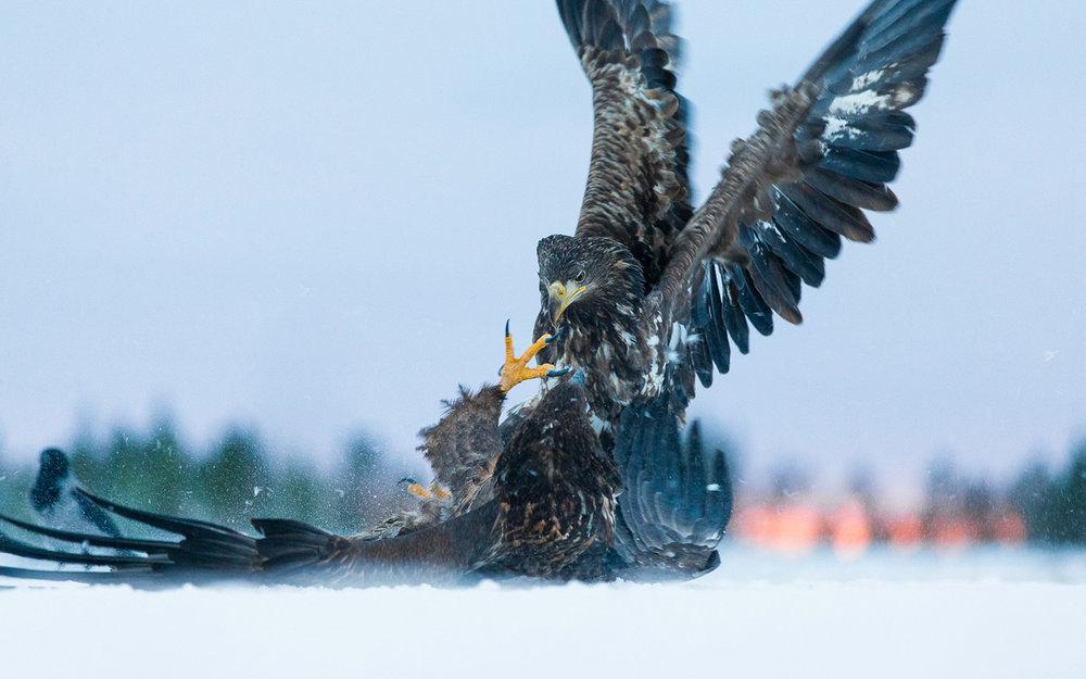 Norway wildlife 7.jpg