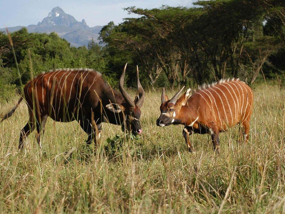 Samburu National Reserve >>