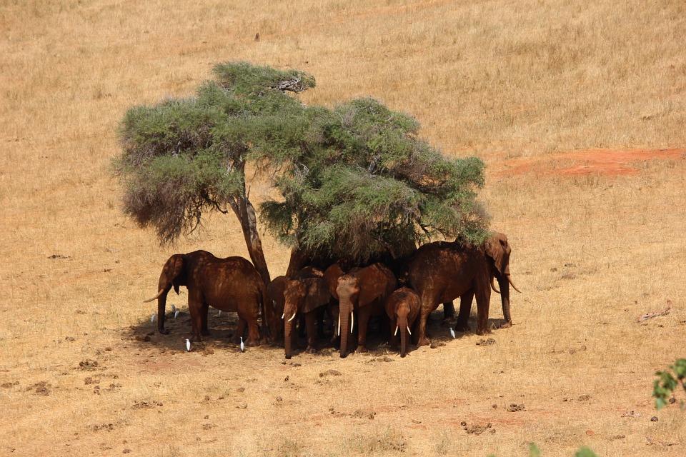 Tsavo East National Park >>