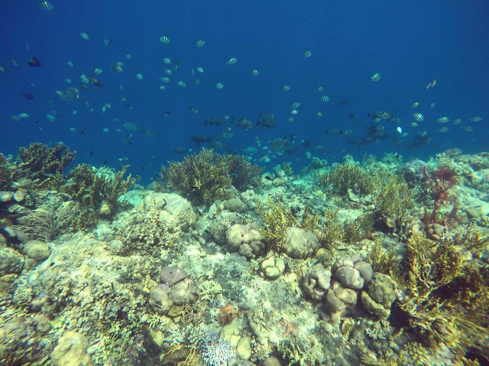 Bali Exotic 4.jpg