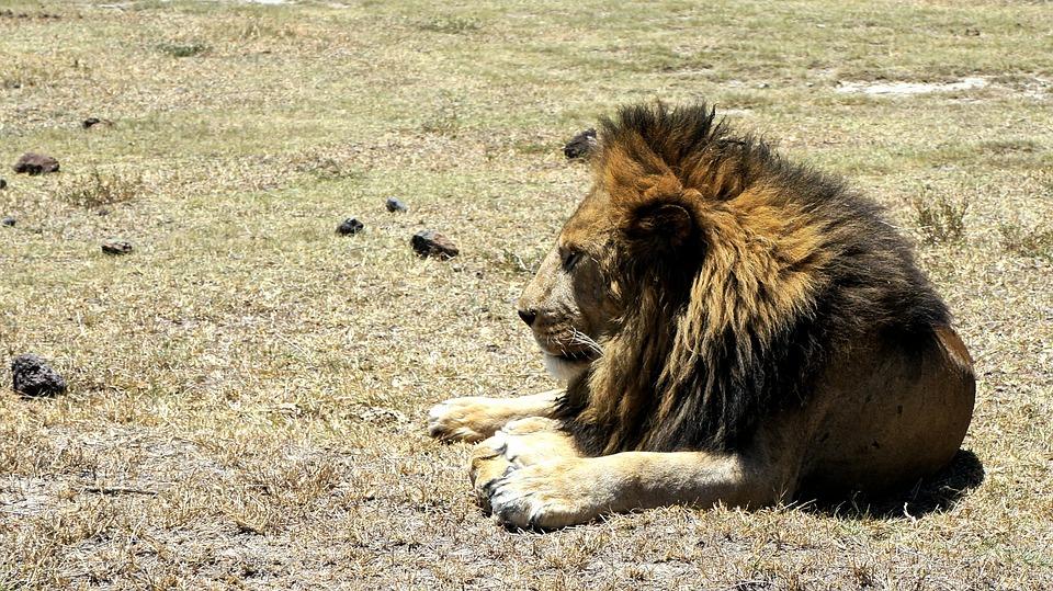 Tanzania Ngorongoro 4.jpg