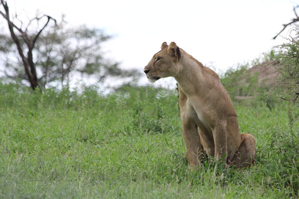 Tanzania Tarangire 4.jpg