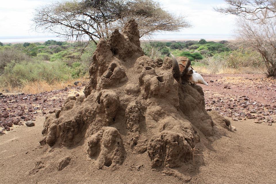 Tanzania Ngorongoro 13.jpg