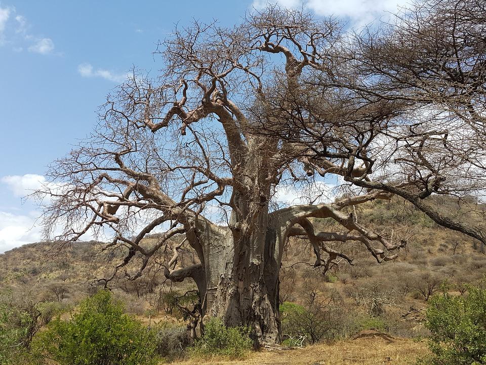 Tanzania Ngorongoro 14.jpg