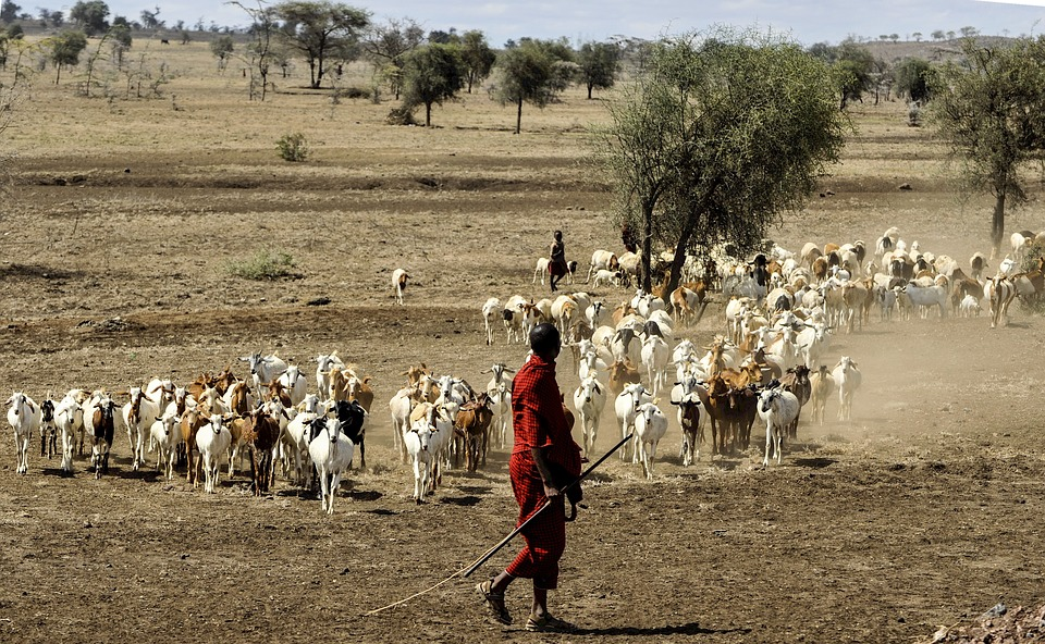 Tanzania Serengeti 19.jpg