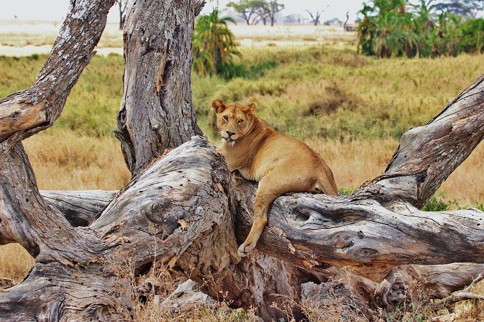 Tanzania Serengeti 12.jpg