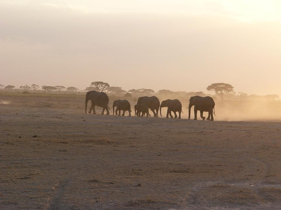 Kenya Amboseli.jpg