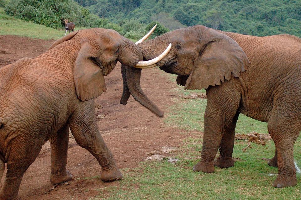 Kenya Aberdare NP.jpg