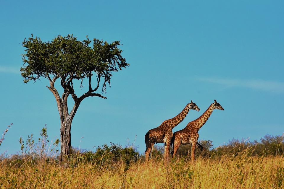 Tanzania Serengeti 6.jpg