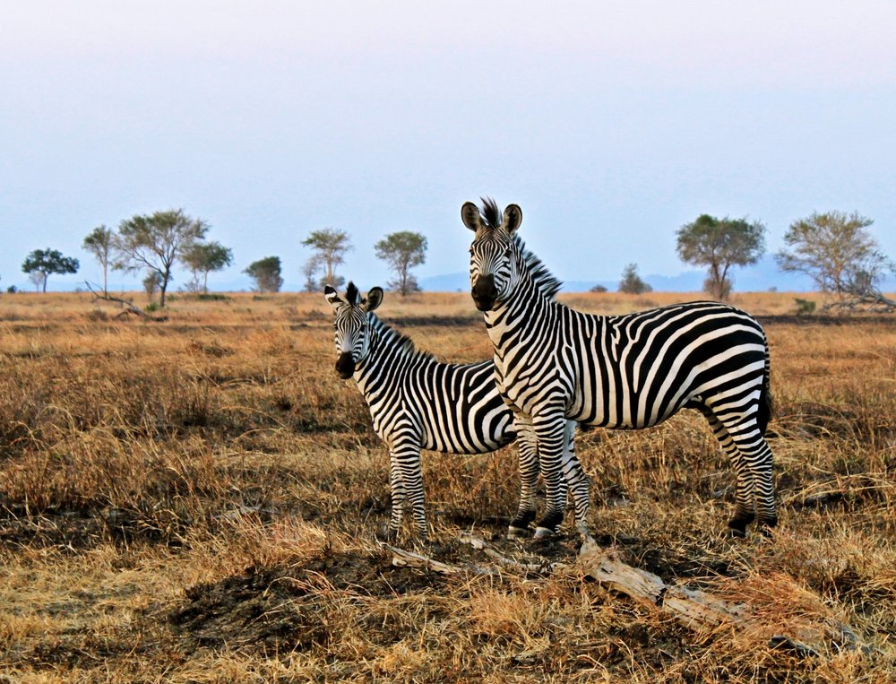 Tanzania Mikumi 7.jpg