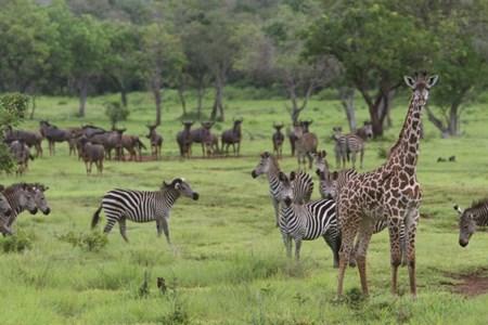Tanzania selous 4.jpg
