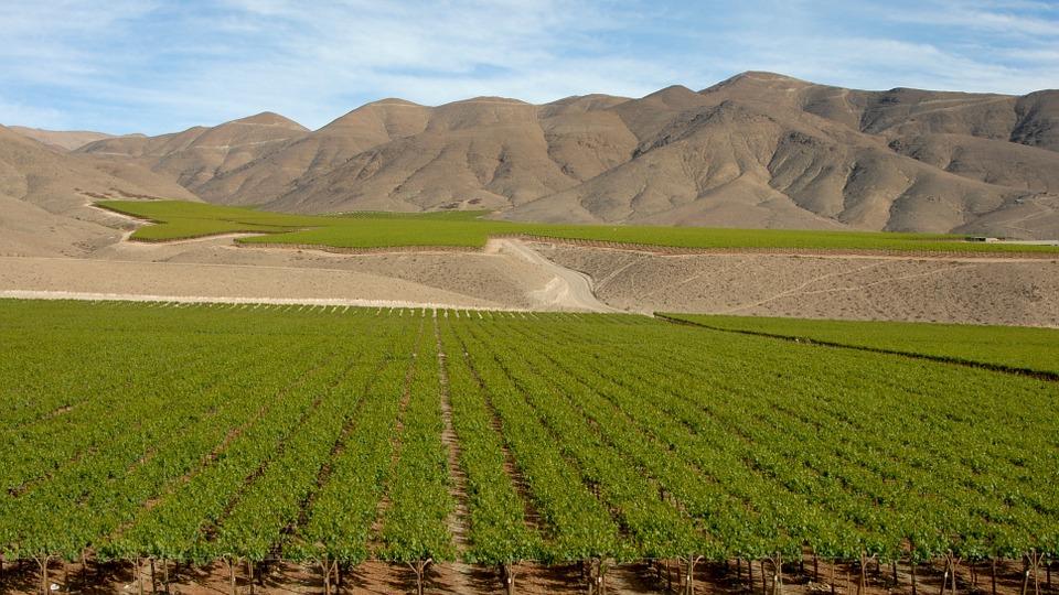 Chile wine 4.jpg