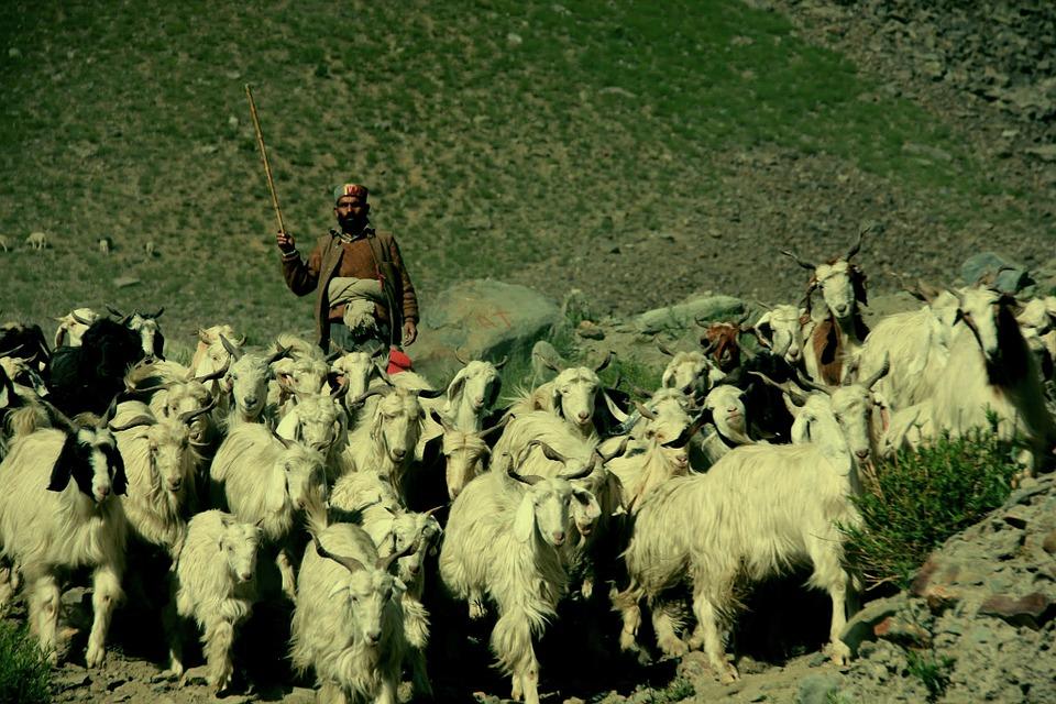 India Ladakh 3.jpg
