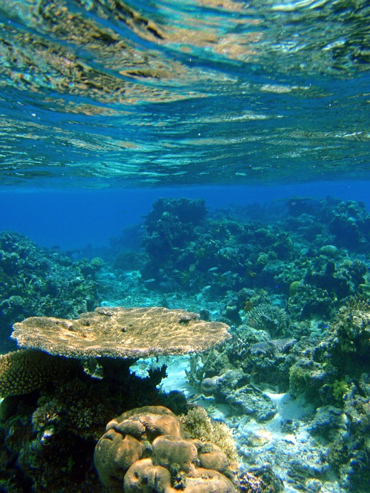 Fiji 12.jpg
